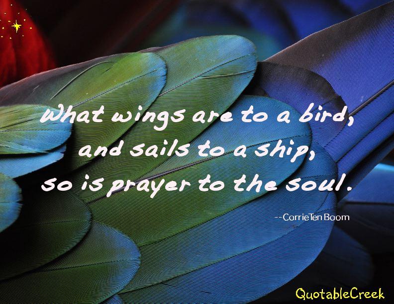 wingstoabird