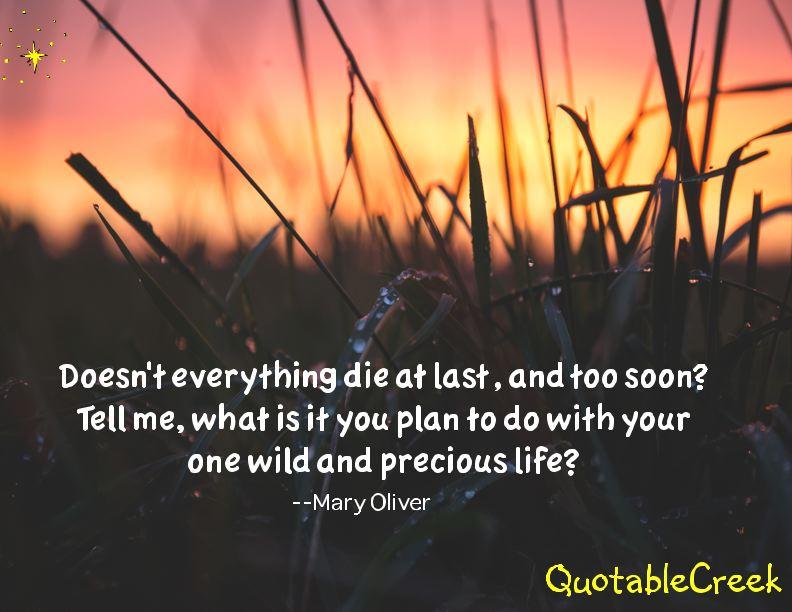 wild-and-precious